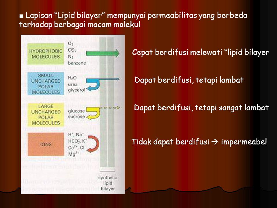 "■ Lapisan ""Lipid bilayer"" mempunyai permeabilitas yang berbeda terhadap berbagai macam molekul Cepat berdifusi melewati ""lipid bilayer Dapat berdifusi"