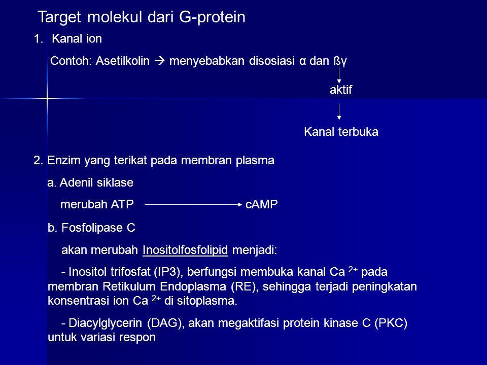 Target molekul dari G-protein 1.Kanal ion Contoh: Asetilkolin  menyebabkan disosiasi α dan ßγ 2. Enzim yang terikat pada membran plasma a. Adenil sik