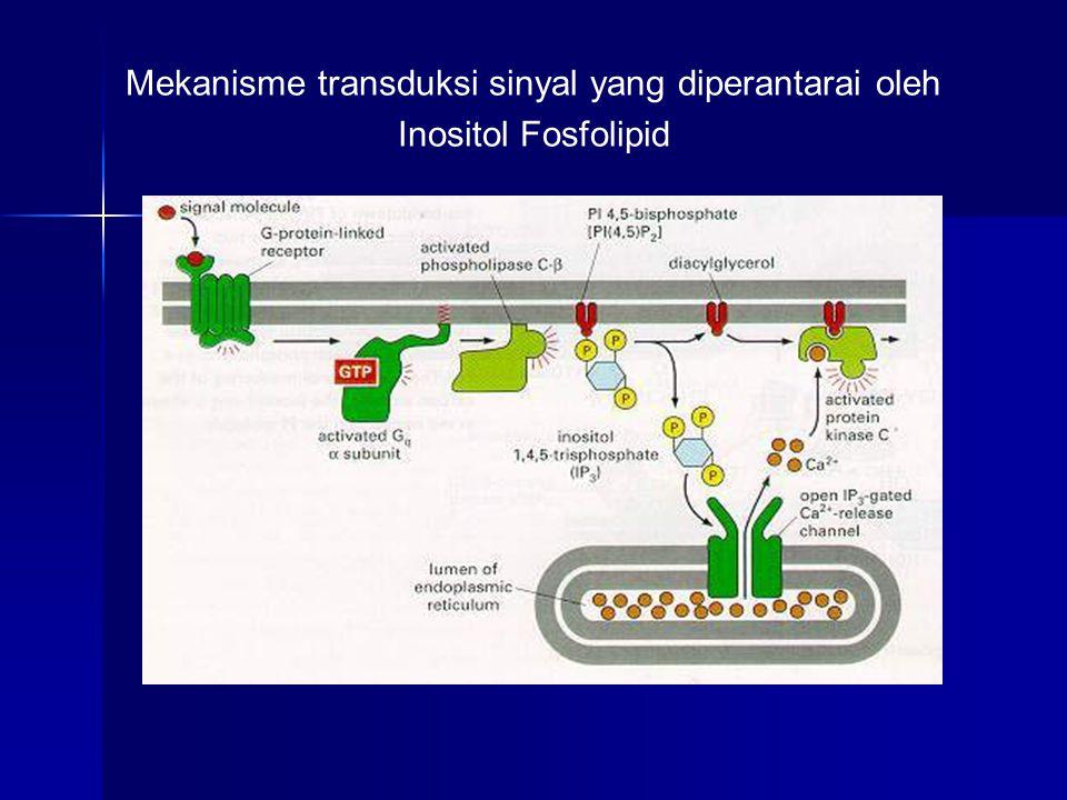 Mekanisme transduksi sinyal yang diperantarai oleh Inositol Fosfolipid