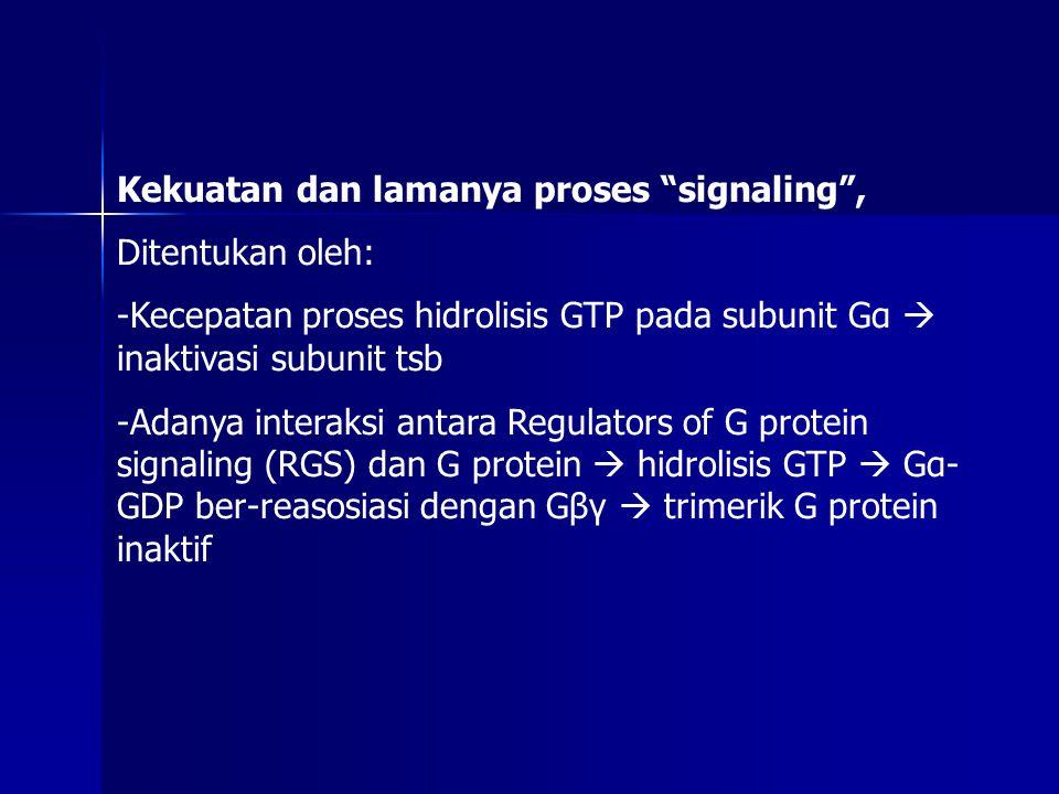 """Kekuatan dan lamanya proses """"signaling"""", Ditentukan oleh: -Kecepatan proses hidrolisis GTP pada subunit Gα  inaktivasi subunit tsb -Adanya interaksi"""