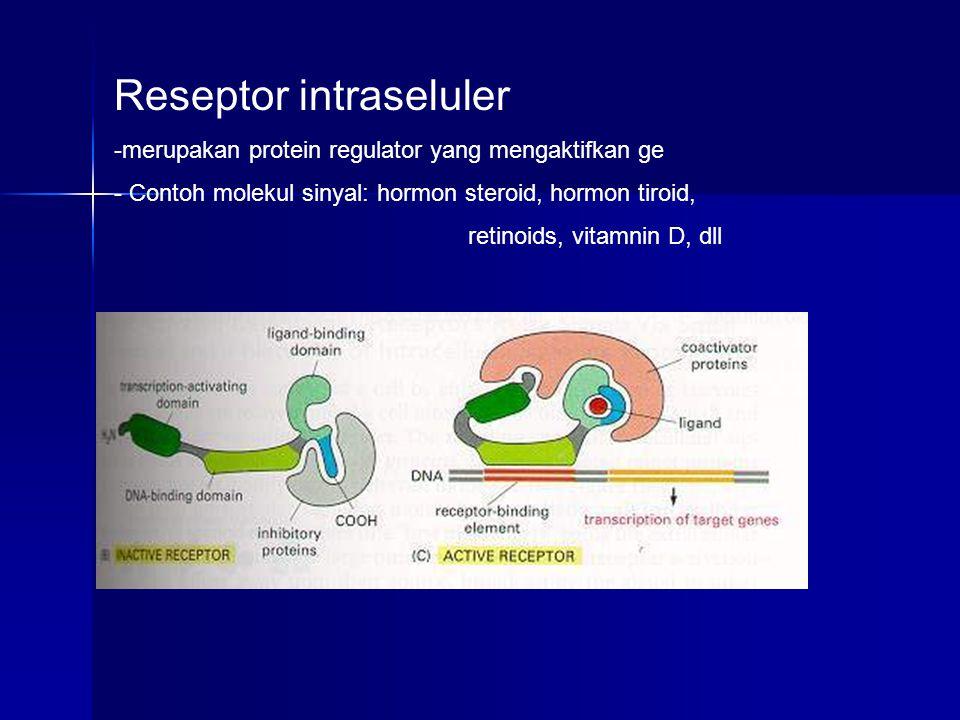 Reseptor intraseluler -merupakan protein regulator yang mengaktifkan ge - Contoh molekul sinyal: hormon steroid, hormon tiroid, retinoids, vitamnin D,