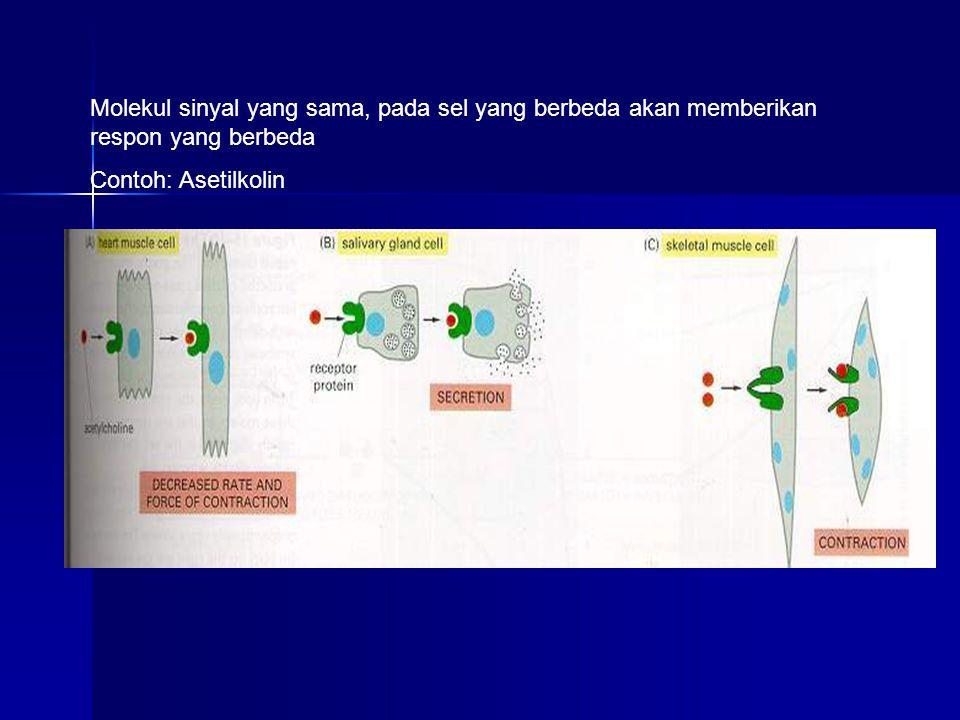 Molekul sinyal yang sama, pada sel yang berbeda akan memberikan respon yang berbeda Contoh: Asetilkolin