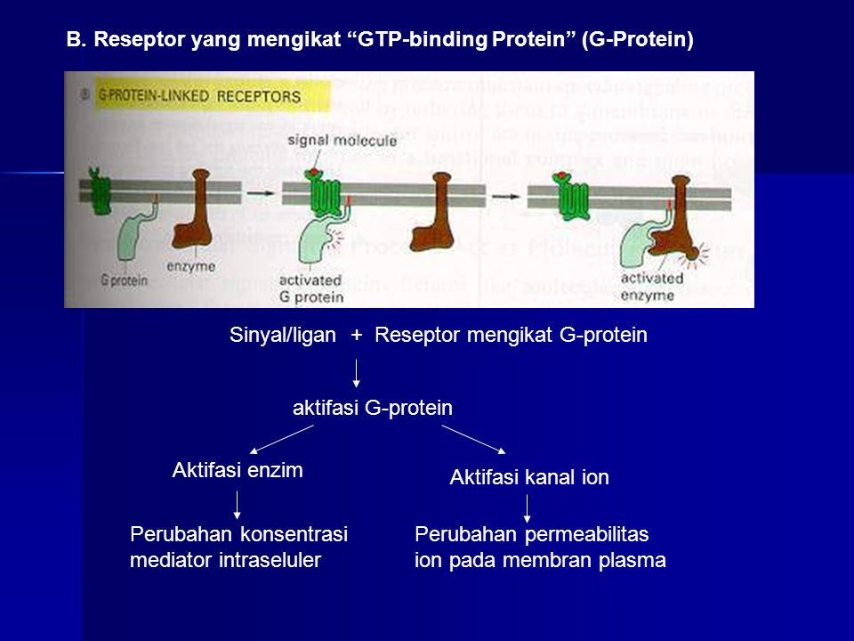 Reseptor intraseluler -merupakan protein regulator yang mengaktifkan ge - Contoh molekul sinyal: hormon steroid, hormon tiroid, retinoids, vitamnin D, dll