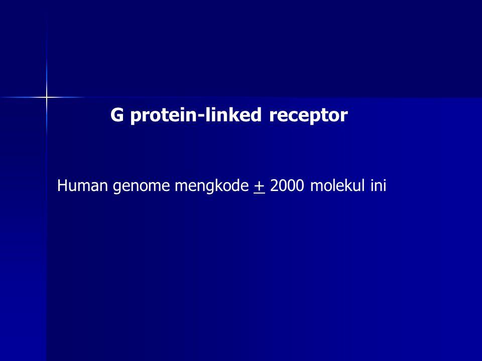 G protein-linked receptor A.Ketika tidak ada stimulus, reseptor dan G protein inaktif dan terpisah B.Ketika signal ekstraseluler terikat dgn reseptor, terjadi perubahan konformasi pada reseptor; G protein terikat reseptor C.Perubahan pada α-subunit menyebabkan GDP digantikan oleh GTP, selanjutnya menyebabkan α-subunit terpisah dari βγ- subunit
