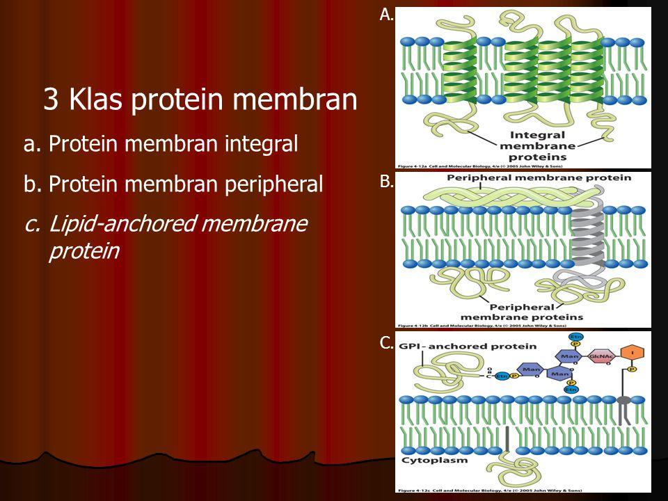 Berbagai bentuk asosiasi protein membran dengan lipid bilayer 1.α–helix tunggal 2.