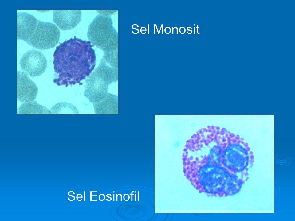 Sel Monosit Sel Eosinofil