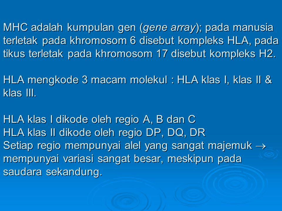 MHC adalah kumpulan gen (gene array); pada manusia terletak pada khromosom 6 disebut kompleks HLA, pada tikus terletak pada khromosom 17 disebut kompl