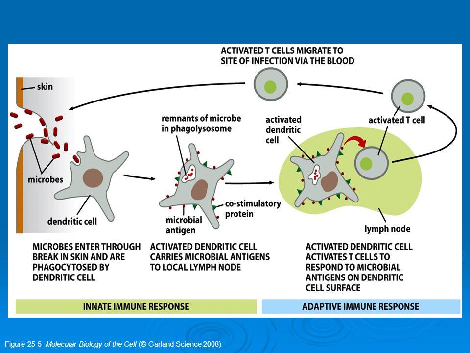 Elemen/unsur yang terlibat dalam innate immunity 1.