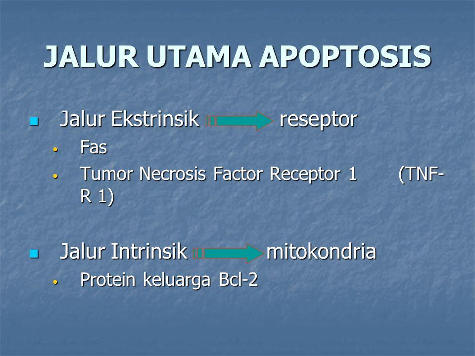 JALUR UTAMA APOPTOSIS Jalur Ekstrinsik reseptor Jalur Ekstrinsik reseptor Fas Fas Tumor Necrosis Factor Receptor 1 (TNF- R 1) Tumor Necrosis Factor Re