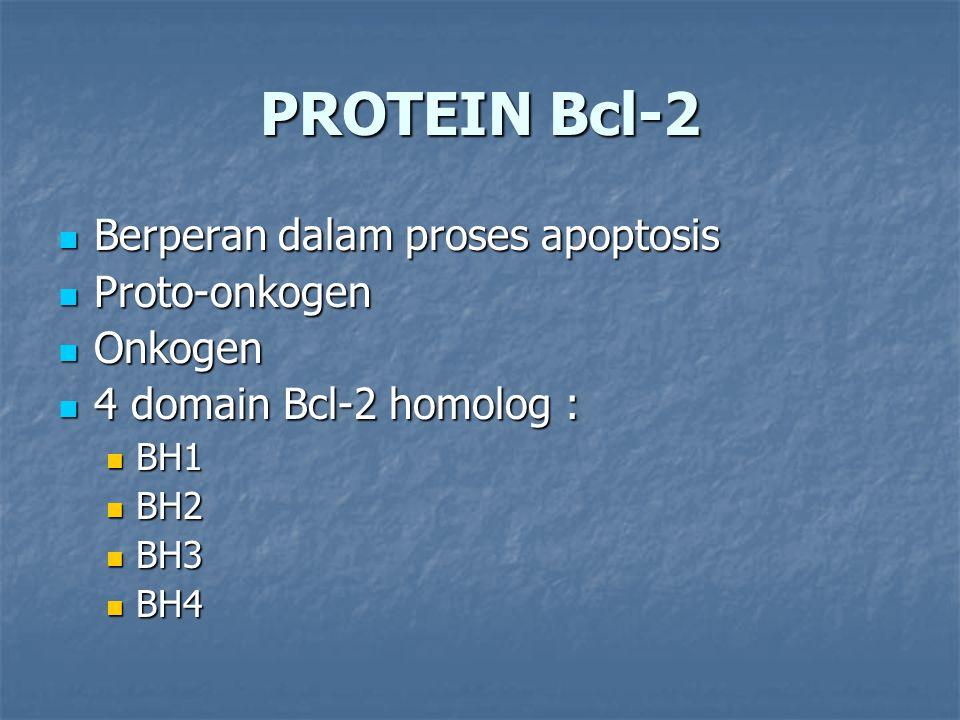 PROTEIN Bcl-2 Berperan dalam proses apoptosis Berperan dalam proses apoptosis Proto-onkogen Proto-onkogen Onkogen Onkogen 4 domain Bcl-2 homolog : 4 domain Bcl-2 homolog : BH1 BH1 BH2 BH2 BH3 BH3 BH4 BH4