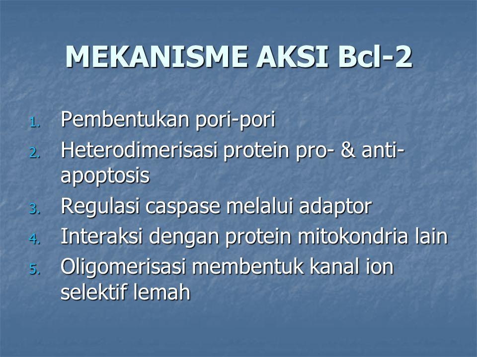MEKANISME AKSI Bcl-2 1. Pembentukan pori-pori 2. Heterodimerisasi protein pro- & anti- apoptosis 3. Regulasi caspase melalui adaptor 4. Interaksi deng