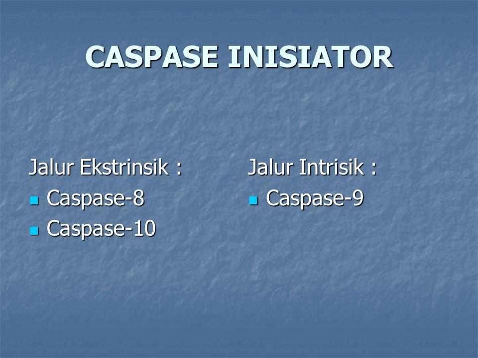 CASPASE INISIATOR Jalur Ekstrinsik : Caspase-8 Caspase-8 Caspase-10 Caspase-10 Jalur Intrisik : Caspase-9 Caspase-9