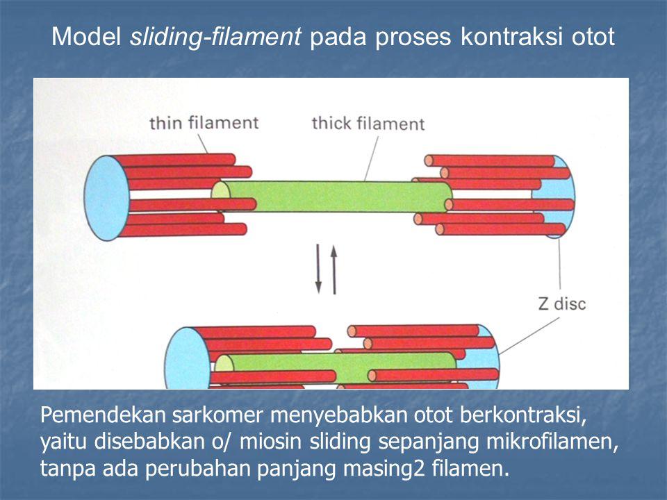 Pemendekan sarkomer menyebabkan otot berkontraksi, yaitu disebabkan o/ miosin sliding sepanjang mikrofilamen, tanpa ada perubahan panjang masing2 filamen.