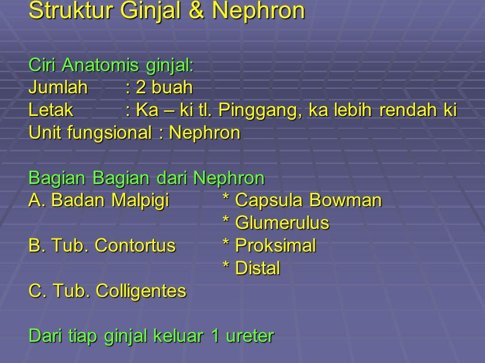 Struktur Ginjal & Nephron Ciri Anatomis ginjal: Jumlah: 2 buah Letak: Ka – ki tl.