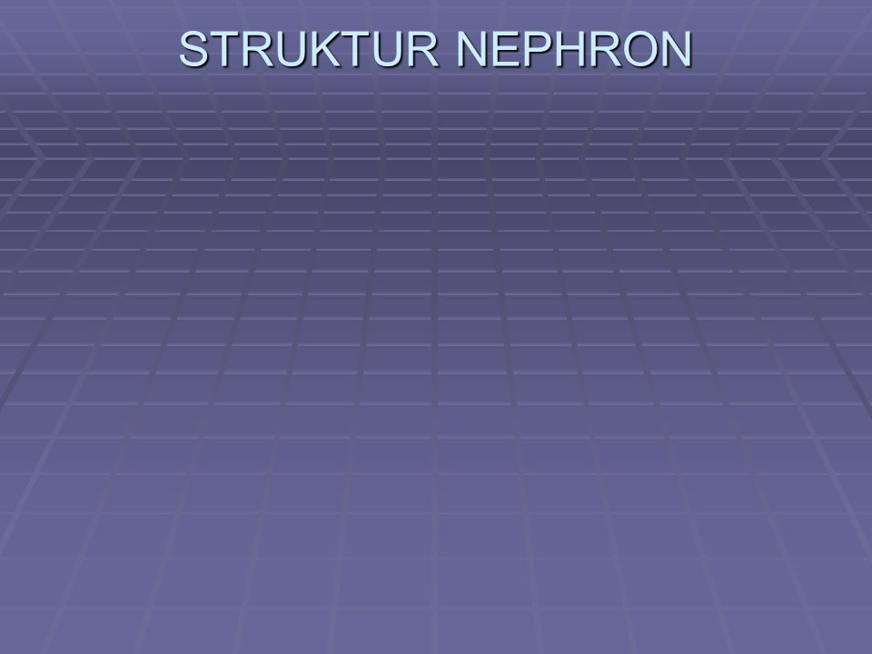 STRUKTUR NEPHRON