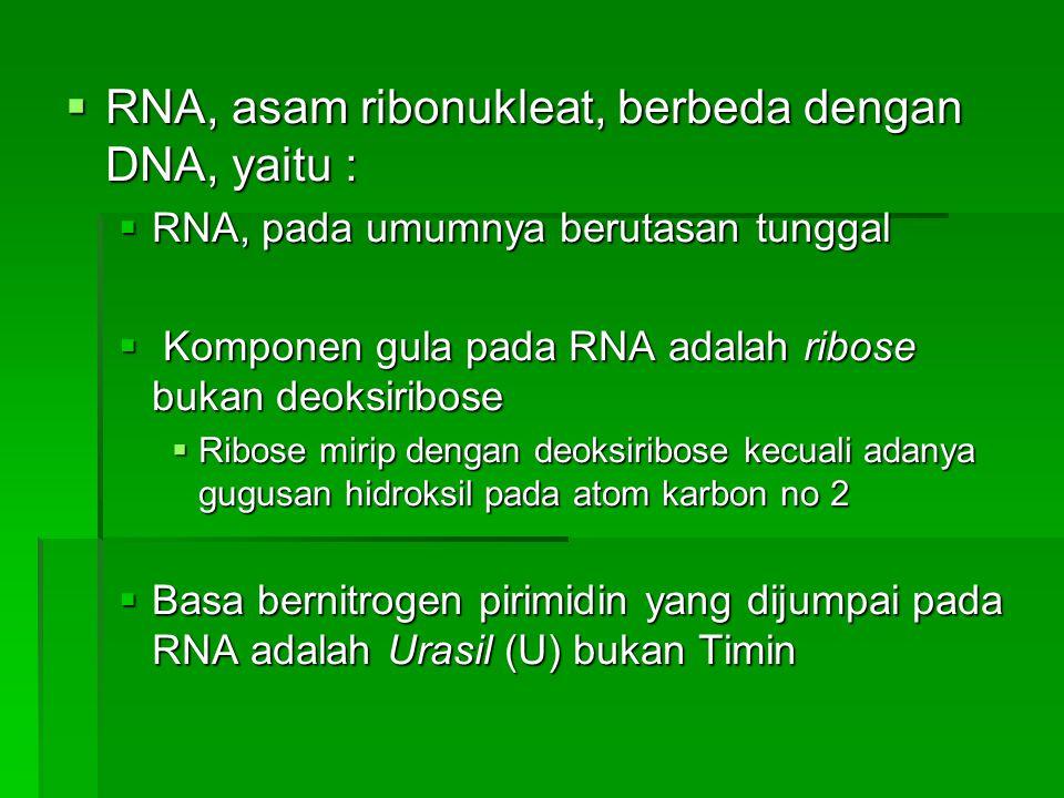  RNA, asam ribonukleat, berbeda dengan DNA, yaitu :  RNA, pada umumnya berutasan tunggal  Komponen gula pada RNA adalah ribose bukan deoksiribose 