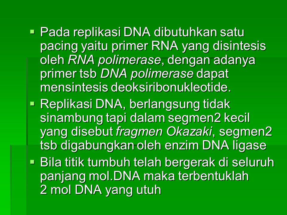  Pada replikasi DNA dibutuhkan satu pacing yaitu primer RNA yang disintesis oleh RNA polimerase, dengan adanya primer tsb DNA polimerase dapat mensin
