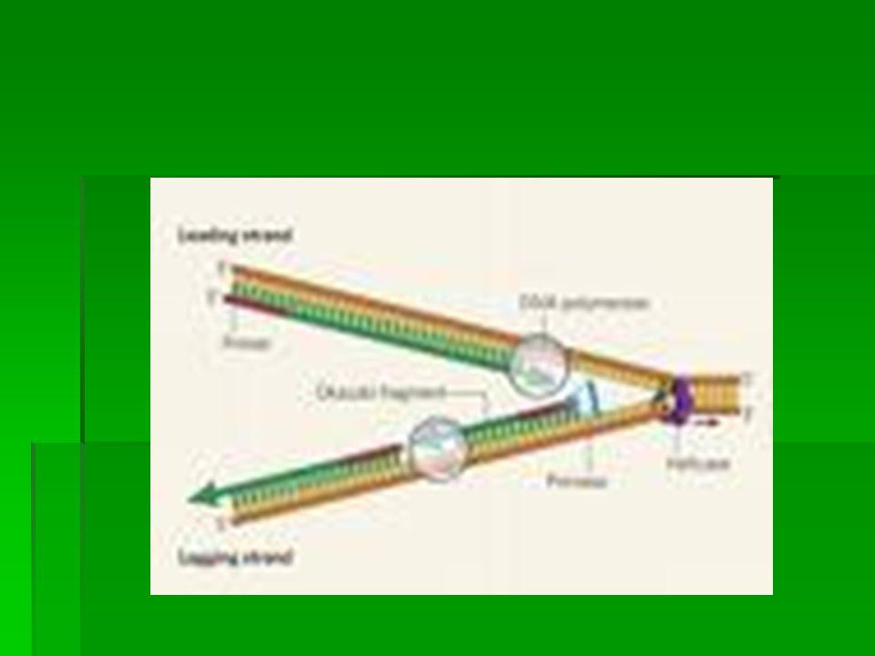 Biosintesis Protein  Nukleotide adalah bahan penyusun DNA  Asam amino ad.