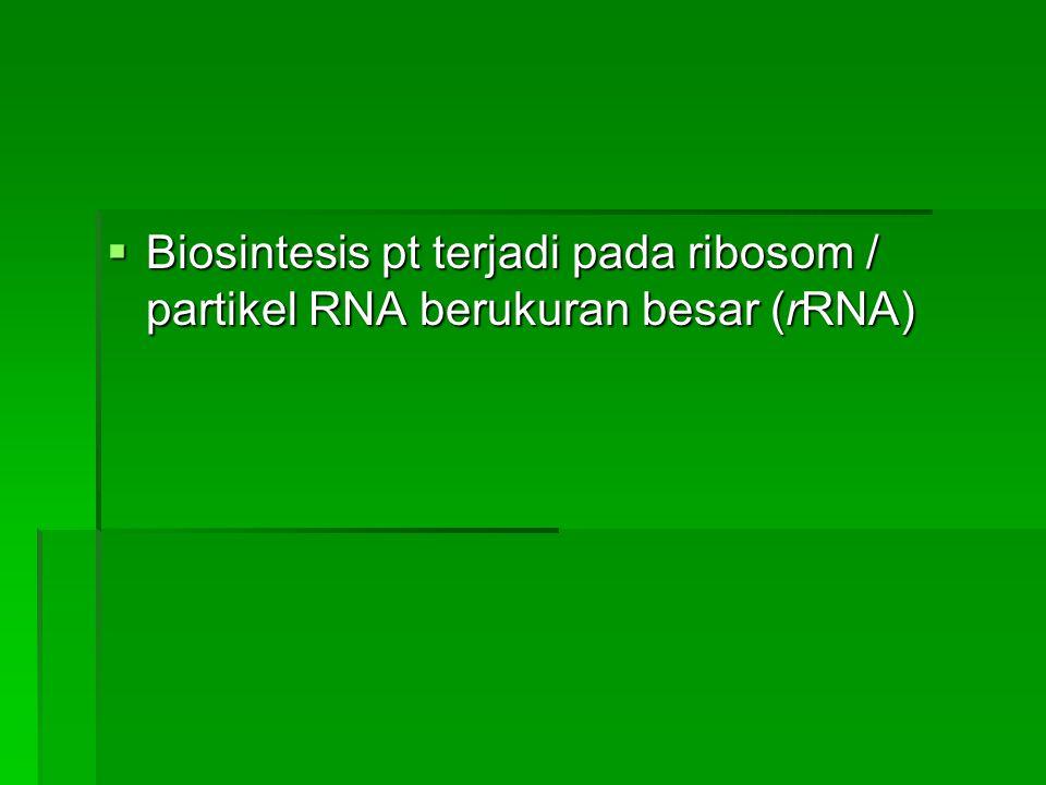  Biosintesis pt terjadi pada ribosom / partikel RNA berukuran besar (rRNA)