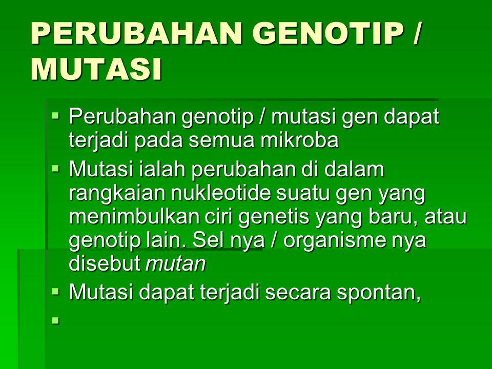 PERUBAHAN GENOTIP / MUTASI  Perubahan genotip / mutasi gen dapat terjadi pada semua mikroba  Mutasi ialah perubahan di dalam rangkaian nukleotide su
