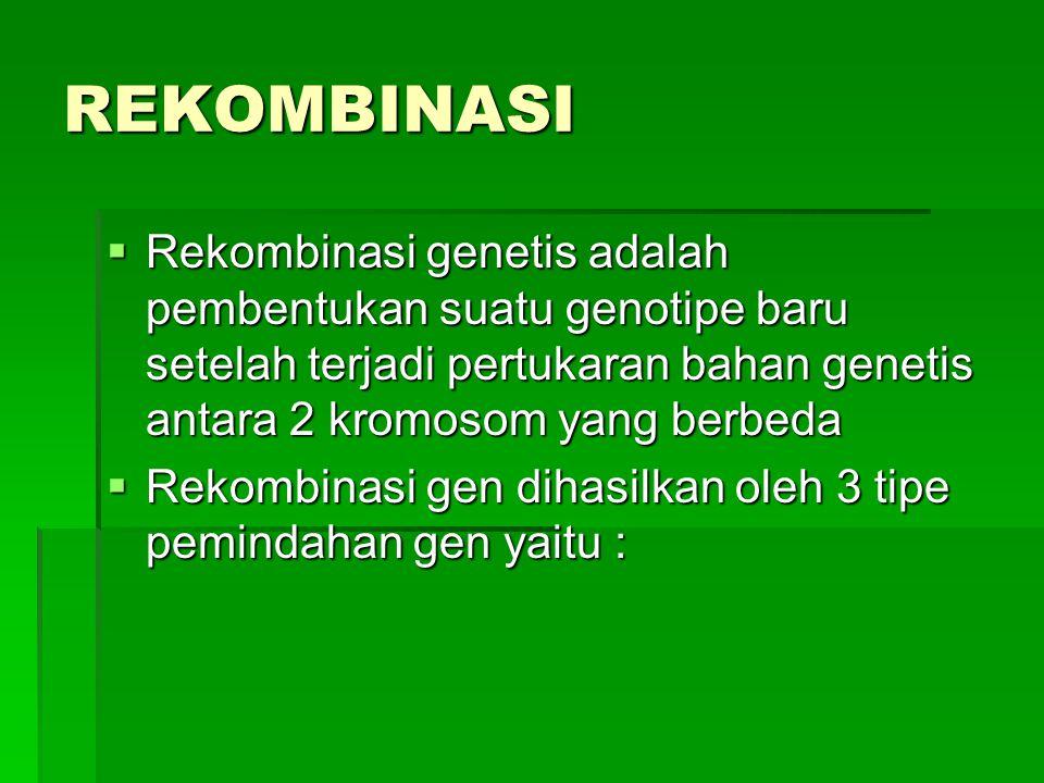 REKOMBINASI  Rekombinasi genetis adalah pembentukan suatu genotipe baru setelah terjadi pertukaran bahan genetis antara 2 kromosom yang berbeda  Rek