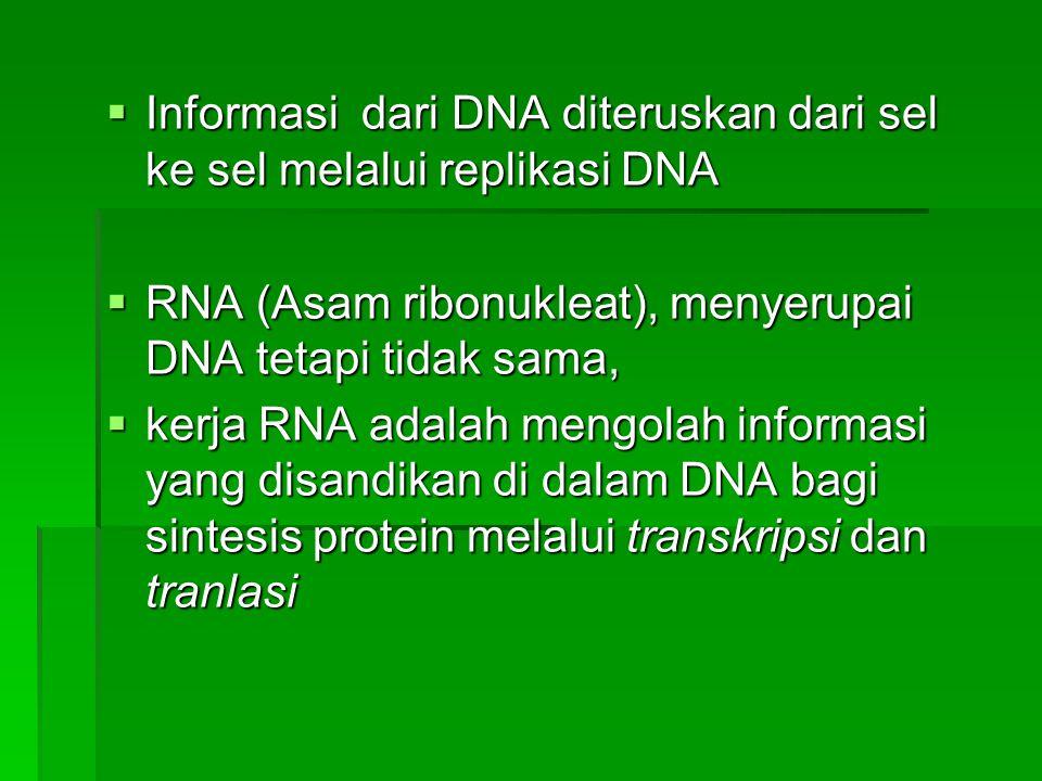  Informasi dari DNA diteruskan dari sel ke sel melalui replikasi DNA  RNA (Asam ribonukleat), menyerupai DNA tetapi tidak sama,  kerja RNA adalah m