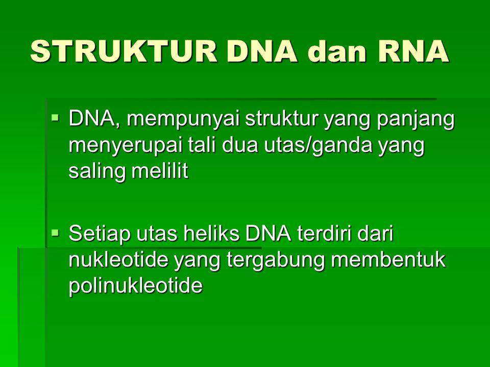 STRUKTUR DNA dan RNA  DNA, mempunyai struktur yang panjang menyerupai tali dua utas/ganda yang saling melilit  Setiap utas heliks DNA terdiri dari n