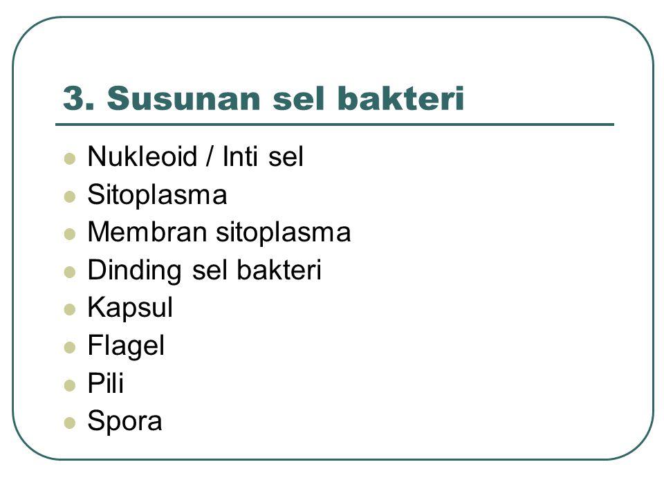 3. Susunan sel bakteri Nukleoid / Inti sel Sitoplasma Membran sitoplasma Dinding sel bakteri Kapsul Flagel Pili Spora