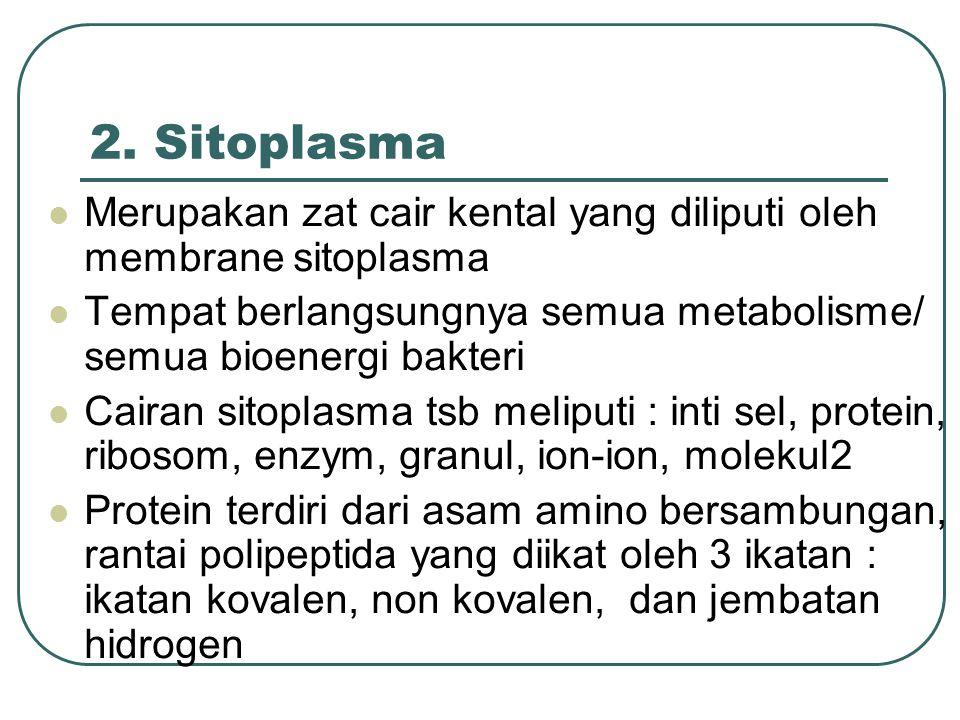 2. Sitoplasma Merupakan zat cair kental yang diliputi oleh membrane sitoplasma Tempat berlangsungnya semua metabolisme/ semua bioenergi bakteri Cairan