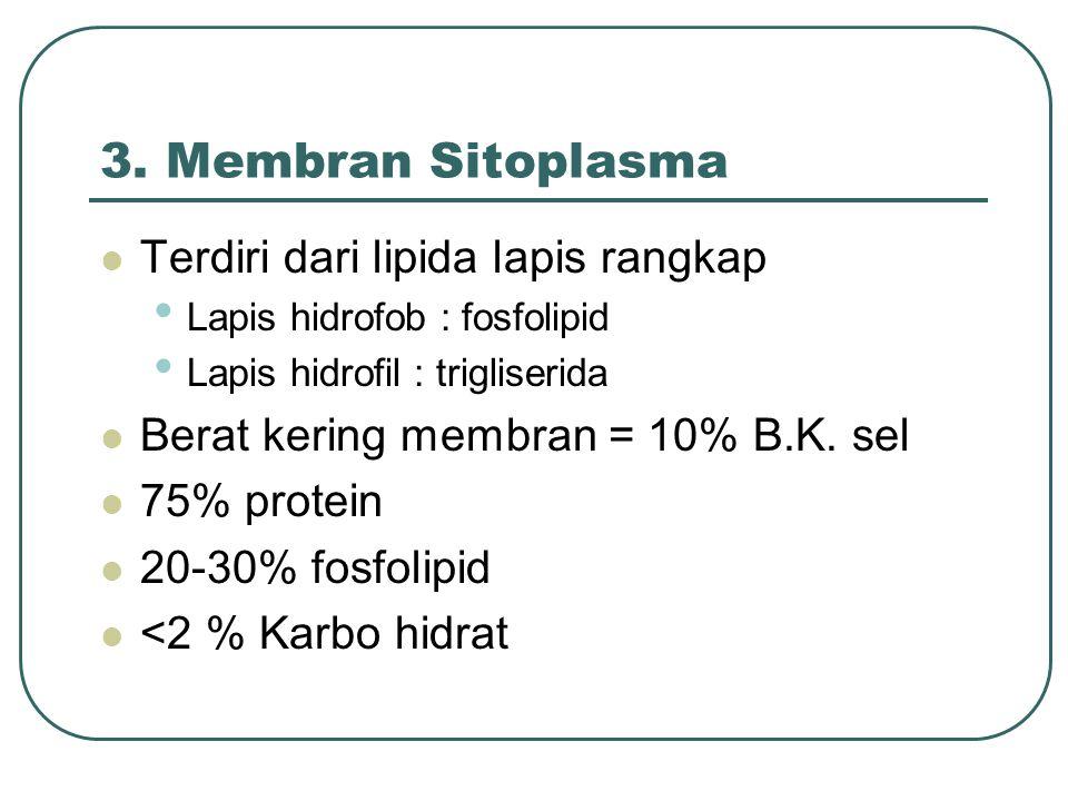 3. Membran Sitoplasma Terdiri dari lipida lapis rangkap Lapis hidrofob : fosfolipid Lapis hidrofil : trigliserida Berat kering membran = 10% B.K. sel