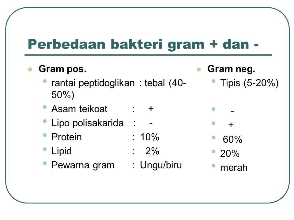 Perbedaan bakteri gram + dan - Gram pos. rantai peptidoglikan : tebal (40- 50%) Asam teikoat : + Lipo polisakarida : - Protein : 10% Lipid : 2% Pewarn