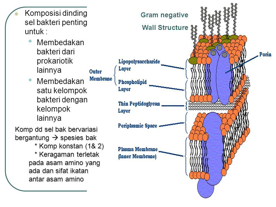 Gram negative Wall Structure Komposisi dinding sel bakteri penting untuk : Membedakan bakteri dari prokariotik lainnya Membedakan satu kelompok bakter
