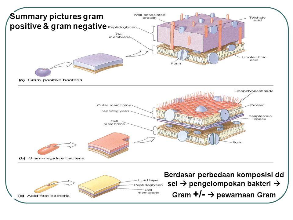 Summary pictures gram positive & gram negative Berdasar perbedaan komposisi dd sel  pengelompokan bakteri  Gram +/-  pewarnaan Gram