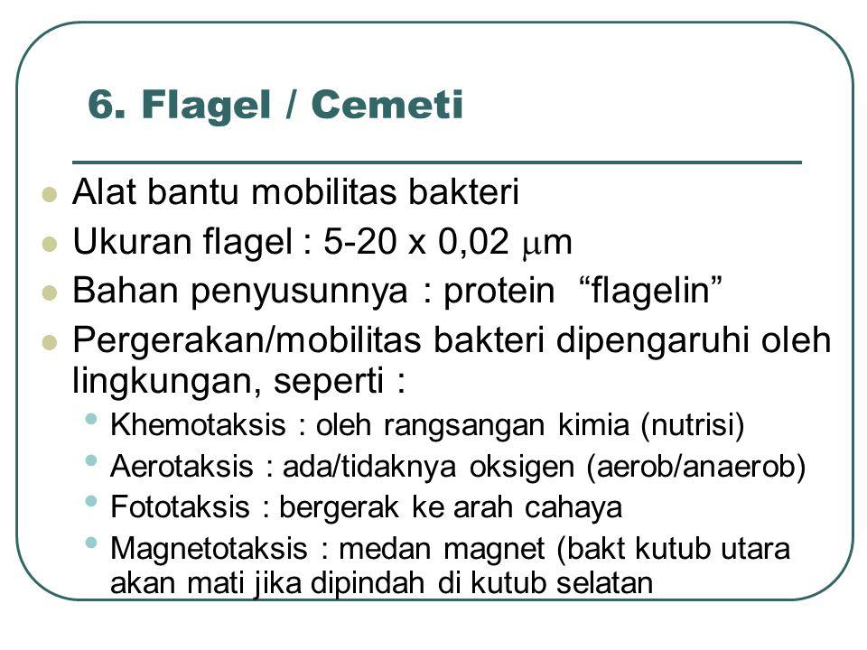 """6. Flagel / Cemeti Alat bantu mobilitas bakteri Ukuran flagel : 5-20 x 0,02  m Bahan penyusunnya : protein """"flagelin"""" Pergerakan/mobilitas bakteri di"""