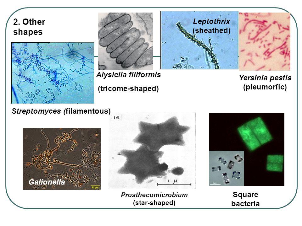 BAKTERI Bakteri Archaea ACTOMYCETES
