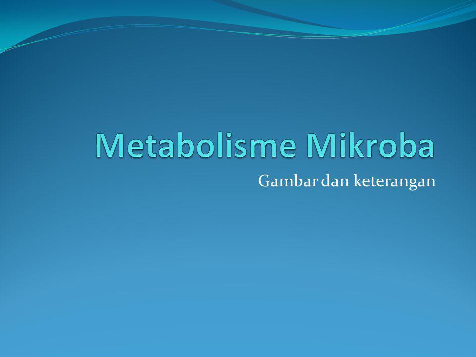 Reaksi Katabolisme dan Anabolisme Metabolisme adalah semua reaksi kimia yang terjadi dalam sel hidup Katabolisme adalah reaksi kimia yang menghancurkan molekul organik kompleks menjadi substansi yang sederhana.