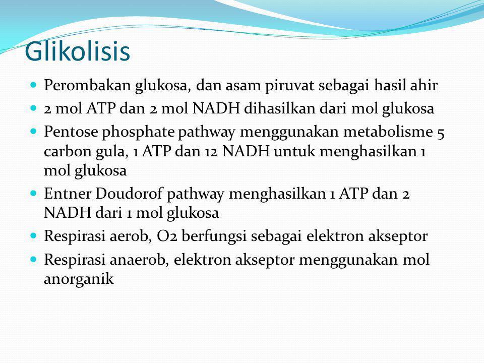 Glikolisis Perombakan glukosa, dan asam piruvat sebagai hasil ahir 2 mol ATP dan 2 mol NADH dihasilkan dari mol glukosa Pentose phosphate pathway meng