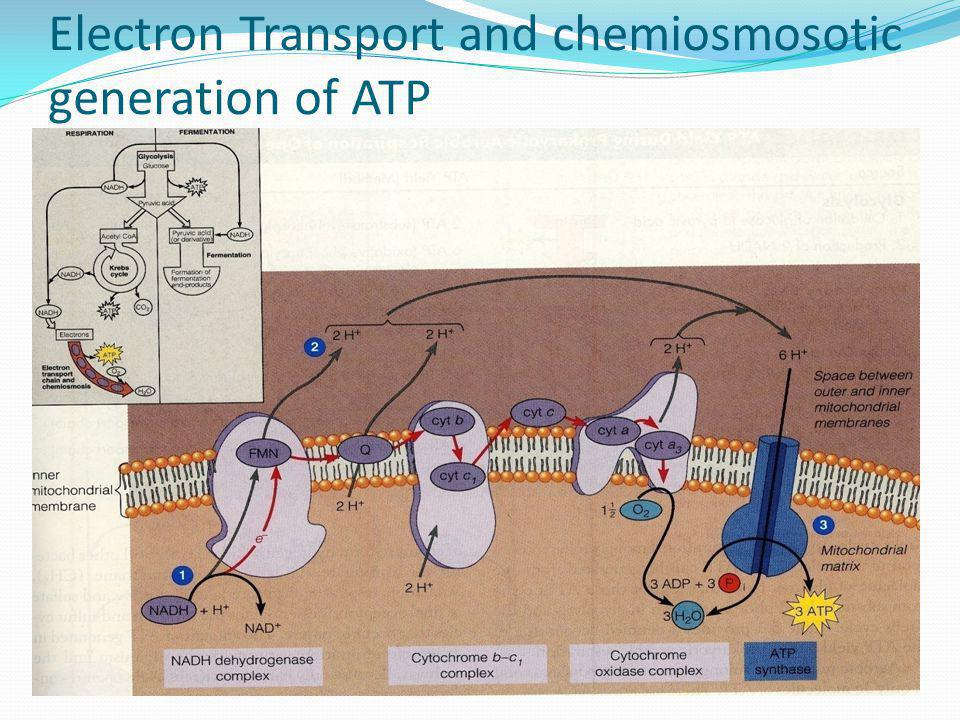 Electron Transport and chemiosmosotic generation of ATP