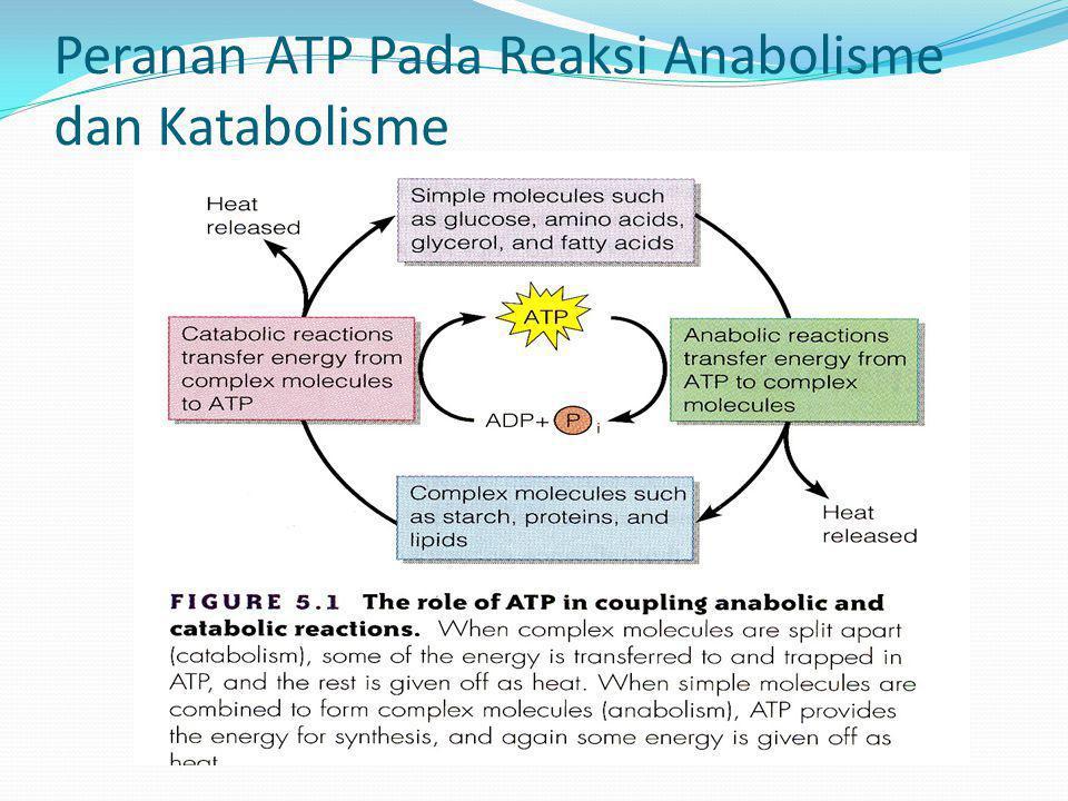 Katabolisme Protein dan Lipid