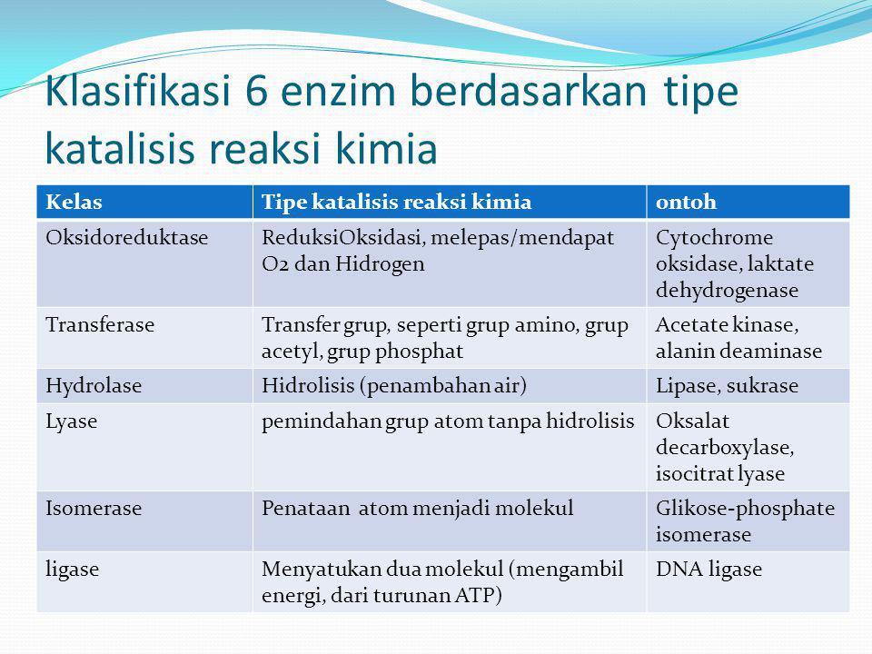 Klasifikasi 6 enzim berdasarkan tipe katalisis reaksi kimia KelasTipe katalisis reaksi kimiaontoh OksidoreduktaseReduksiOksidasi, melepas/mendapat O2