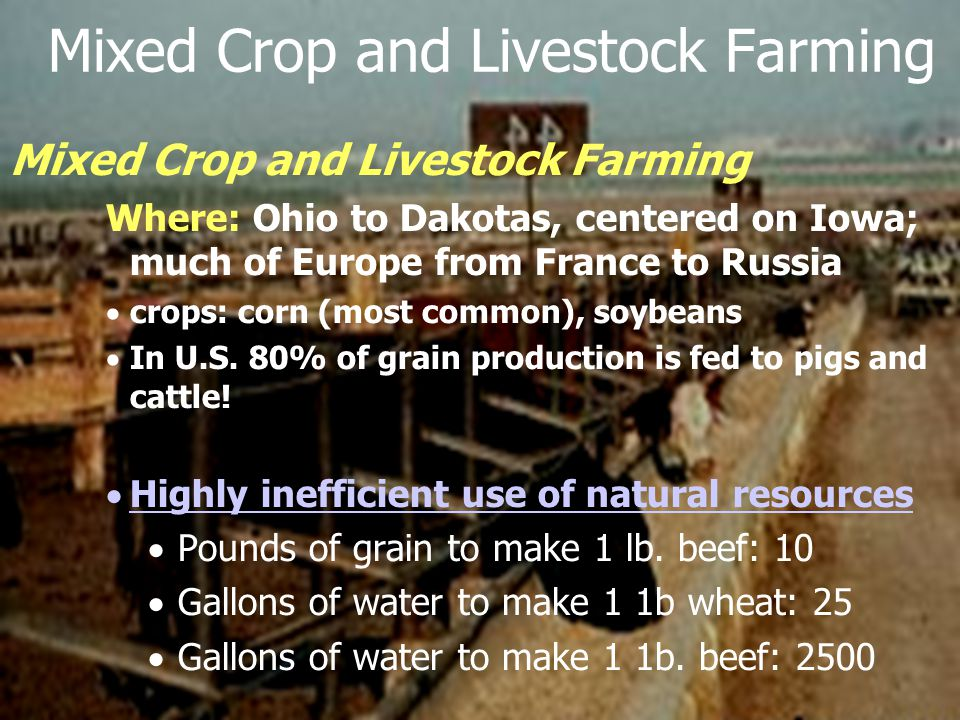 Mixed Crop and Livestock Farming Where: Ohio to Dakotas, centered on Iowa; much of Europe from France to Russia  crops: corn (most common), soybeans