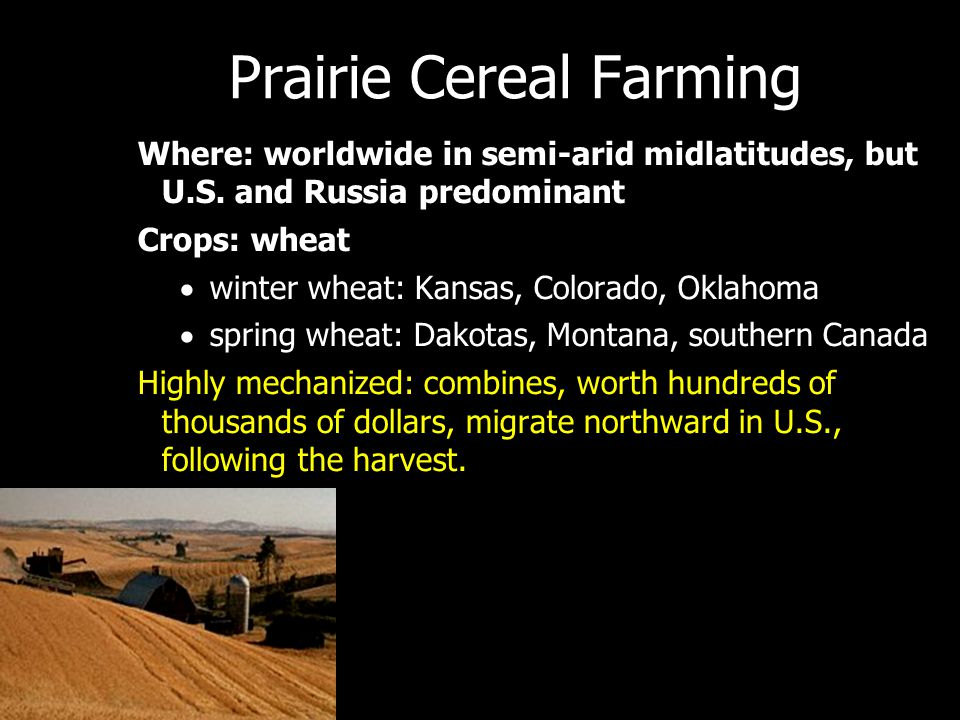 Prairie Cereal Farming Where: worldwide in semi-arid midlatitudes, but U.S. and Russia predominant Crops: wheat  winter wheat: Kansas, Colorado, Okla