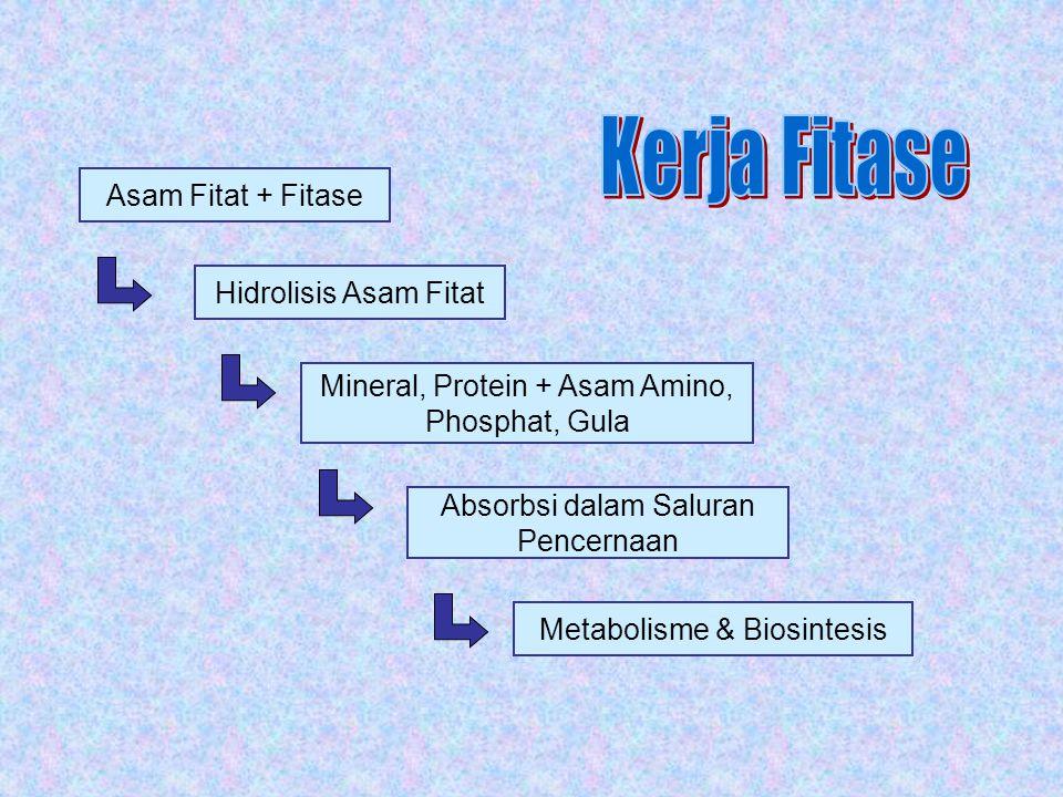 Asam Fitat + Fitase Hidrolisis Asam Fitat Mineral, Protein + Asam Amino, Phosphat, Gula Absorbsi dalam Saluran Pencernaan Metabolisme & Biosintesis