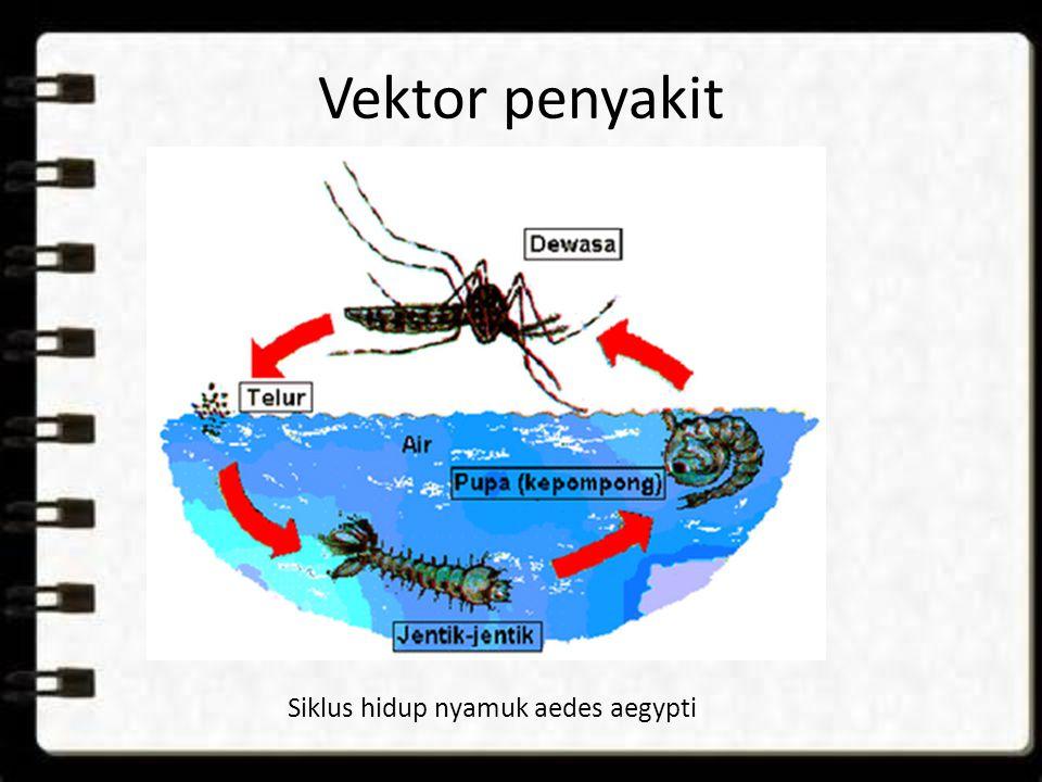 Vektor penyakit Siklus hidup nyamuk aedes aegypti