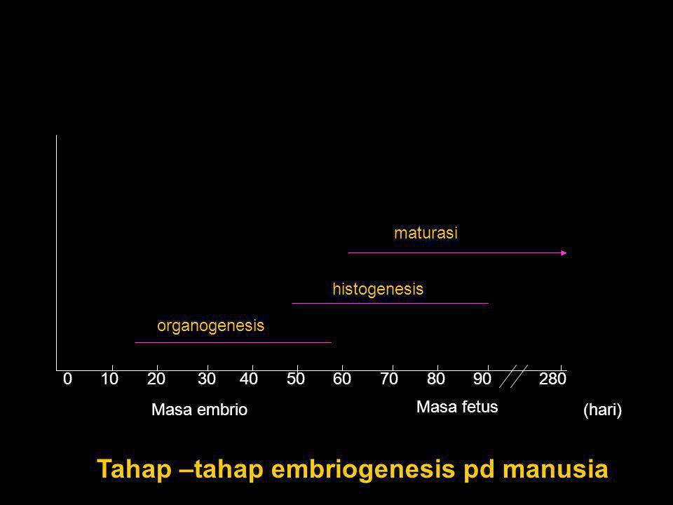0 10 20 30 40 50 60 70 80 90 280 organogenesis histogenesis maturasi Masa embrio Masa fetus (hari) Tahap –tahap embriogenesis pd manusia