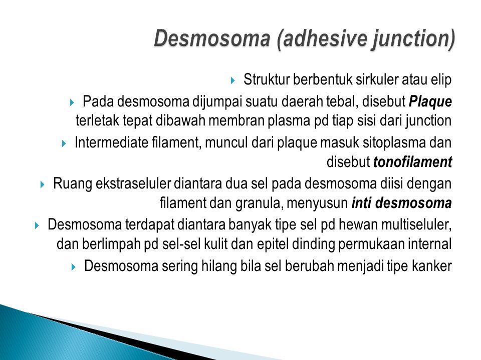 Struktur berbentuk sirkuler atau elip  Pada desmosoma dijumpai suatu daerah tebal, disebut Plaque terletak tepat dibawah membran plasma pd tiap sis