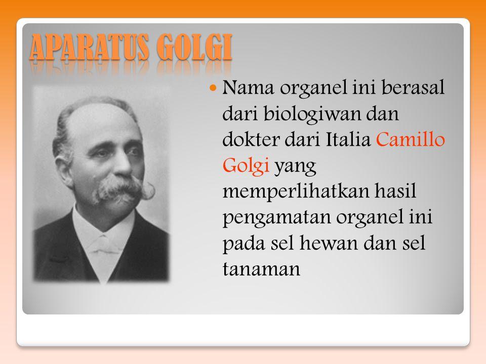 Nama organel ini berasal dari biologiwan dan dokter dari Italia Camillo Golgi yang memperlihatkan hasil pengamatan organel ini pada sel hewan dan sel