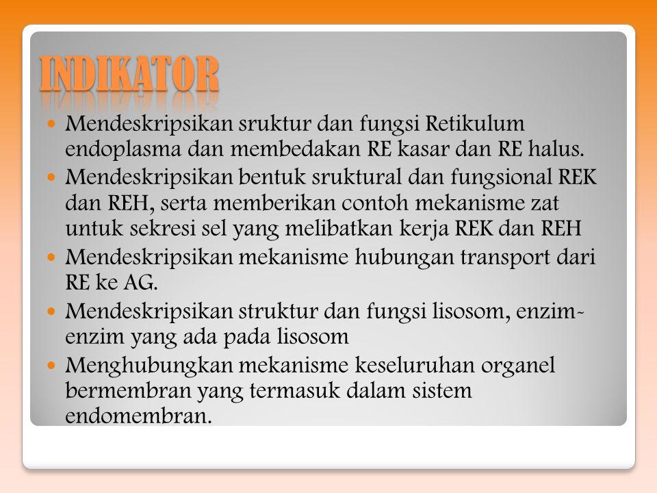 Mendeskripsikan sruktur dan fungsi Retikulum endoplasma dan membedakan RE kasar dan RE halus. Mendeskripsikan bentuk sruktural dan fungsional REK dan