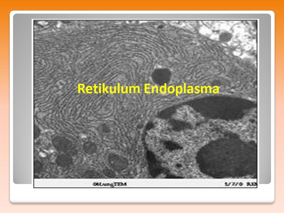Nama organel ini berasal dari biologiwan dan dokter dari Italia Camillo Golgi yang memperlihatkan hasil pengamatan organel ini pada sel hewan dan sel tanaman