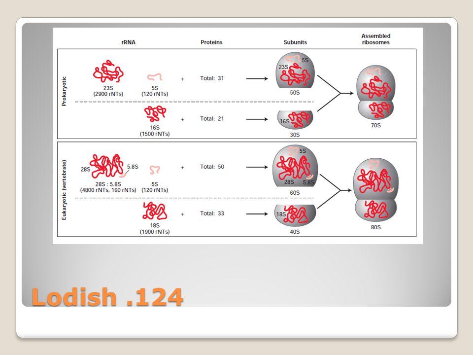 Lodish.124